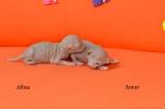 Amur & Afina, 1 Woche alt