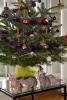 Unsere Kitten aus dem 4. Wurf beim Weihnachtsbaum