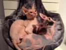 Anela & Nikki