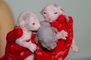 Vasilisa, Valeria, Valentin, 12 Tage
